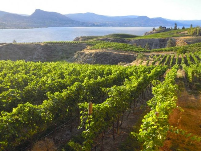 3 Days Canada Wine Tours