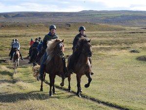 4 Day Saltvík Comfort Horse Riding Holiday in Húsavík, Norðurþing