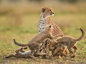 10 Days Wildlife Safari in Kenya and Tanzania