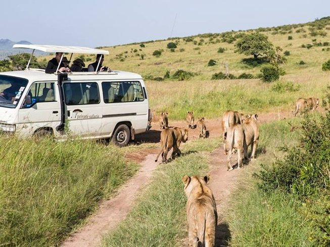 7 Days Maasai Mara, Lake Nakuru, Lake Naivasha, & Amboseli Safari in Kenya