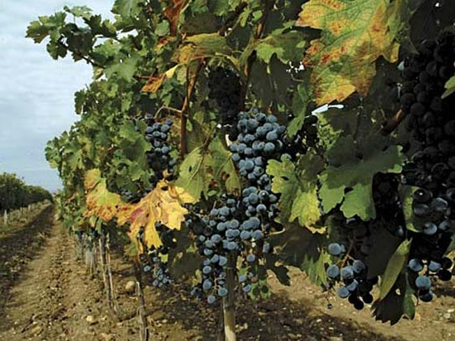12 Days Wine & Cooking Holiday in Macedonia