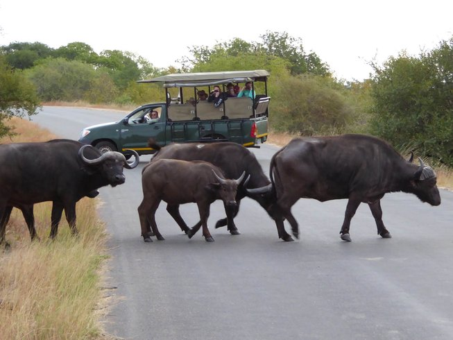 5 Days Thrilling Big Five Safari South Africa