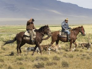10 Days Breathtaking Horse Riding Tour in Magallanes, Chile