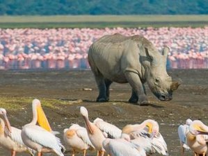 2-Daagse Safari in Lake Nakuru National Park, Kenia