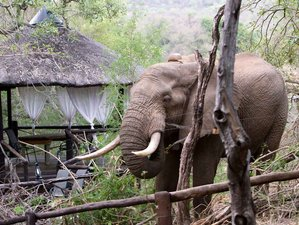 3 Days Best of Balule Nature Reserve, Classic Safari in South Africa
