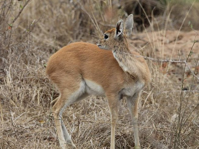 4 Days Ultimate Botswana Safari
