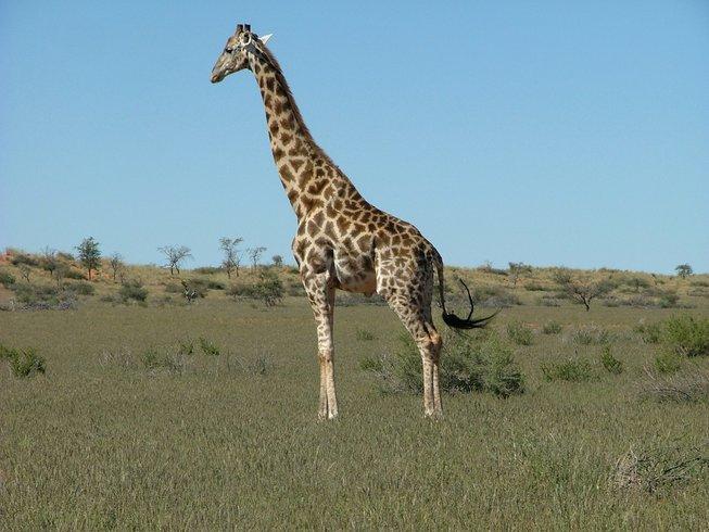 14 Days Self-Drive Safari in Namibia