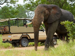 4 Days Kruger National Park Classic and Walking Safari in South Africa