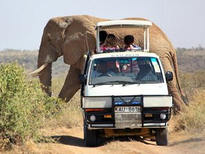 3 Days Tsavo East and Amboseli Road Safari in Kenya