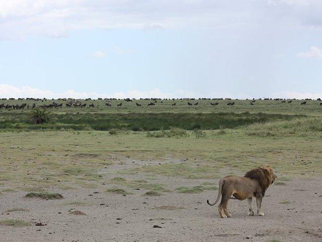 6 Days Standard Big Five Safari in Tanzania