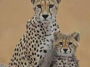 6 Days Great Wildebeest Migration and Big Cats Safari in Serengeti National Park, Tanzania