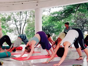 26 Days 200hr Yoga Teacher Training with Naturopathy and Emotional Rebalancing in Rishikesh, India