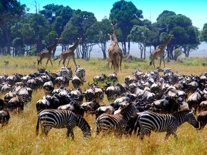 13 Days Wildlife Safari in Kenya and Tanzania