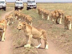 12 Days Wildlife Safaris, Cultural Tour, and Kilimanjaro Trekking Adventure in Tanzania