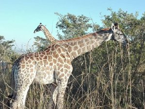 3 Days Kruger National Park and Blyde River Canyon Safari in South Africa