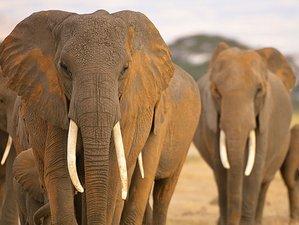 5 Days Maasai Mara, Lake Naivasha, and Lake Nakuru Safari in Kenya