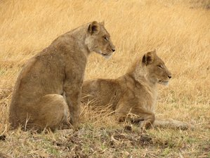 3 Day Central Kalahari Game Reserve Mobile Safari