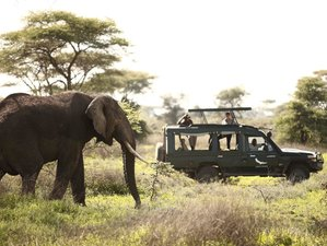 8 Days Tanzania Wildlife Lodge Safari