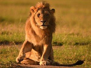 8 Days Classic Highlights of Kenya Safari Tour