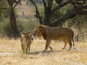 5 Days Tented Camp Safaris in Tanzania