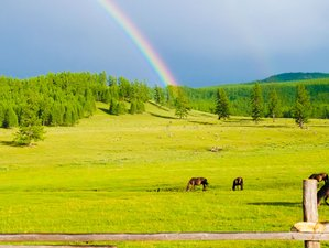 10 Days Horse Trekking in Khentii Mountains, Mongolia