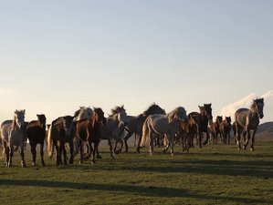 8 Day Work With 70 Horses Overcoming Your Personal Barrier and Fences in Vashlovani National Park