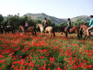4 Day Bitless & Barefoot Ethical Riding Holiday, Cortijo Los Lobos, Malaga