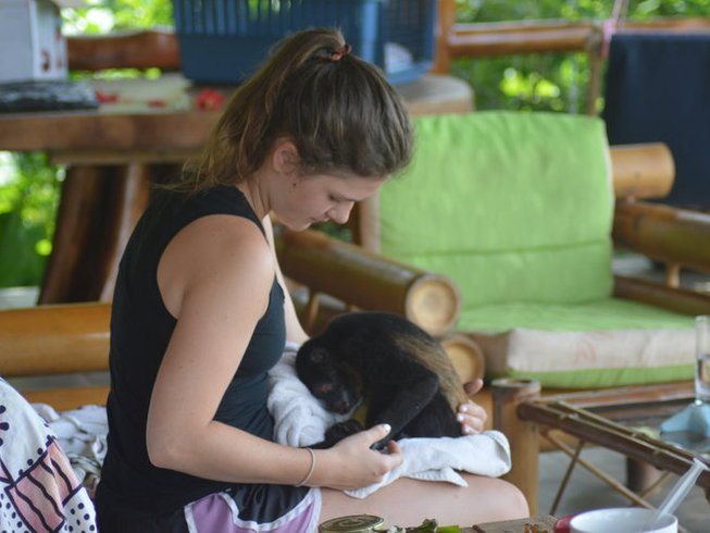 21 Days Wildlife Rescue and Yoga Retreat in Puntarenas Province, Costa Rica