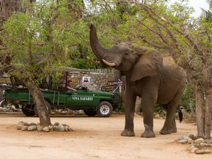 2 Days Blitz Overland Safari in Balule Game Reserve, Greater Kruger National Park, South Africa
