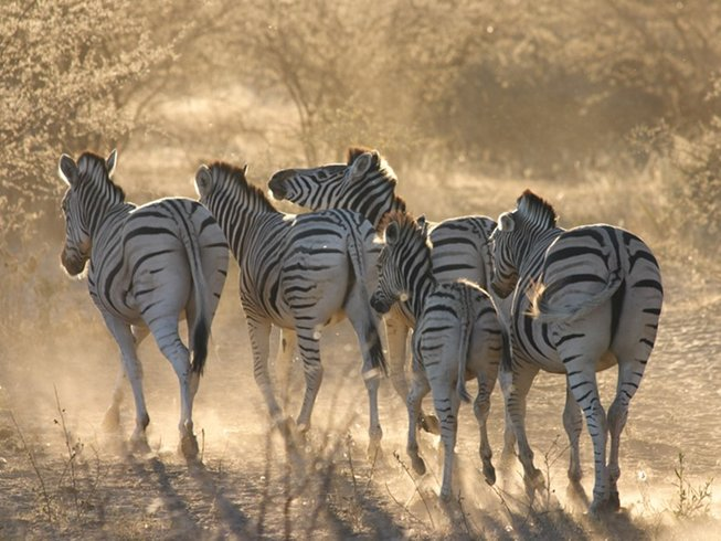 11 Days Budget Self-Drive Safari in Botswana