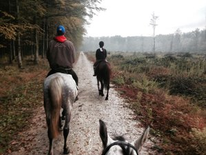5 Day Frula Horse Riding Holiday in Bjelovar,  Bjelovar-Bilogora County