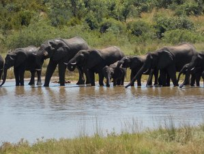 "13 Days ""Southern Explorer"" Safari South Africa, Zimbabwe, and Botswana"
