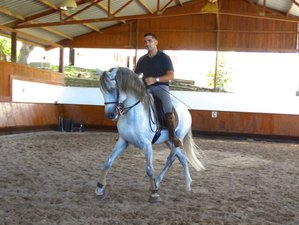 7 Days Intensive Dressage Programme (10 Lessons) Horse Riding Holiday in Portugal