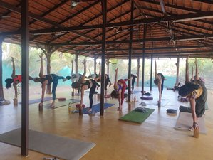 Self Paced Online 200-Hour Multi-Style Yoga Teacher Training - Hatha, Ashtanga, Yin and Vinyasa