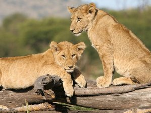 7 Days Animals & Hiking Tanzania Safari