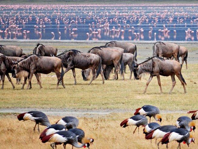 5 Days Ultimate Short Tanzania Safari