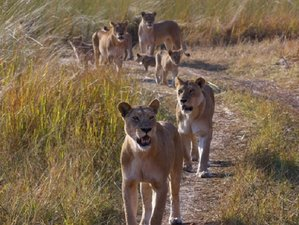5 Days Fly-in Okavango Delta and Moremi Wildlife Safari in Botswana