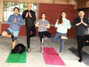 28 Day 200-Hour Yoga Teacher Training Course in Darjeeling, Himalayas