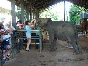 8 Days Best Safari in Sri Lanka