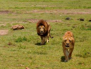 8 Days Lake Manyara, Ngorongoro, Serengeti , and Serene Safari in Tanzania