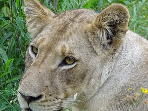 5 Days Best of Safari Experience in Kruger National Park, South Africa