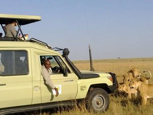 4 Days Masai Mara and Lake Nakuru Budget Tented Camp Safari in Kenya