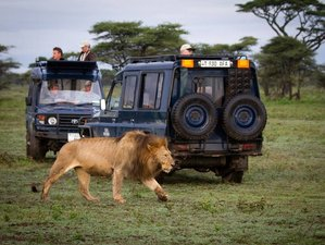 5 Days Highlights of Tanzania Camping Wildlife Safari