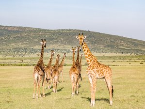 3 Days Masai Mara Wildlife Safari in Kenya
