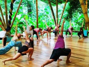 14 Tage Spirit Awakening Retreat Seelenmedizin mit Yoga, Qi Gong, Raw Cacao und Detox Puerto Viejo