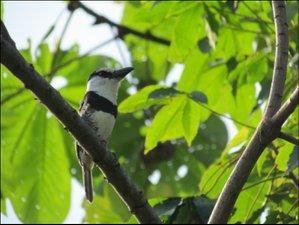 7 Days Wildlife, Nature, and Birding Tour in Darién, Panamá