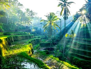 2 Day Pampering Wellness, Meditation, Culture and Watukaru Yoga Retreat in Tabanan, Bali