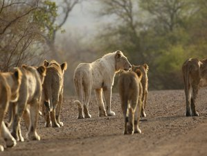 3 Days Kruger via Panorama Private Safari in Kruger National Park, South Africa