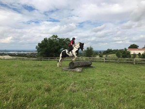 8 Days English Summer Camp and Horse Riding Holiday for Teenagers in Leinster, Ireland