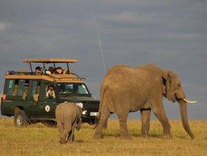 10 Days Kenya's Exclusive Safari to the Orphaned Elephants in Nairobi, Tsavo East, and Chyulu Hills